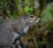 Squirrel In Tree by Jonice