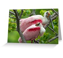 Two Male Roseate Spoonbills Greeting Card