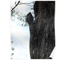 Big Lizard sits in an old gum tree Poster