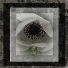 Shades of Grey by Julie-anne Cooke Photography