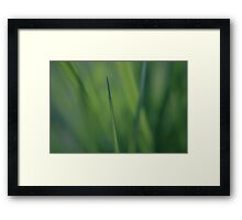 Grasses Framed Print