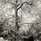 Tree, Elba East by itchingink