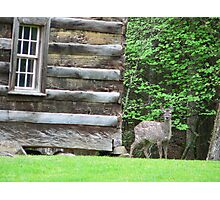 Deer licking his lips Photographic Print