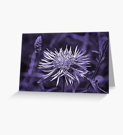 Knapweed - Toned Greeting Card