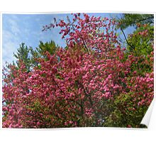 The Crabapple Tree in Our Front Yard Poster
