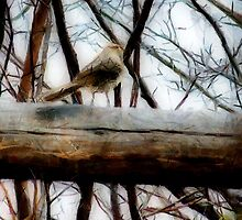 Fat Sparrow, Fat Fence by RC deWinter