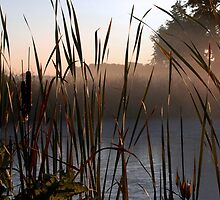 Peeking Through the Cattails  by Jodie Keefe