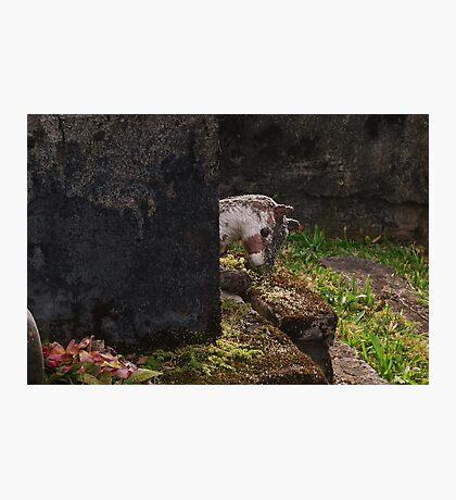 Childs Grave Photographic Print