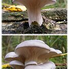Diptych Art of Pleurotus ostreatus. (Oyster Mushroom) by Esther's Art and Photography