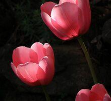 Pink Illumination by Patty Boyte