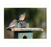 Bluebirds of Happiness  :o) Art Print