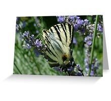 Female Tiger Swallowtail Greeting Card