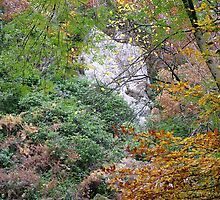 Waterfall, Lake District, Ambleside by Louise Brookes
