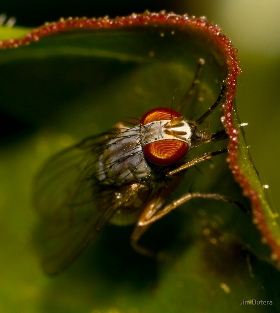 The first fly of the year by Jim Butera