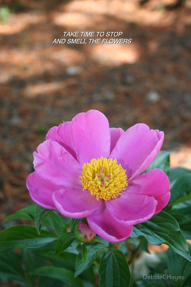 Pink Peony with Yellow Center by DebbieCHayes