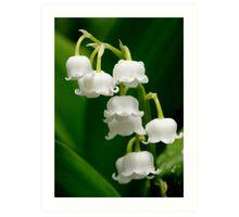 Lily of the Valley (Convallaria majalis) Art Print