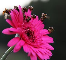 Ladybugs - Pretty on Pink by sonyafrancis