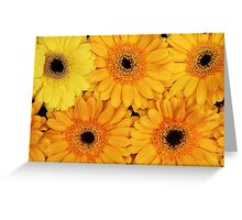 Gerbera Flowers, Petals, Blossoms - Yellow Greeting Card
