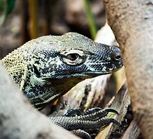 Baby Komodo Dragon by Scott Lyons