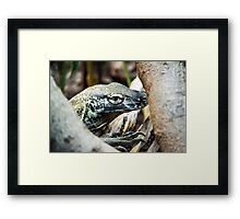 Baby Komodo Dragon Framed Print