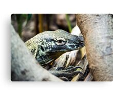 Baby Komodo Dragon Canvas Print