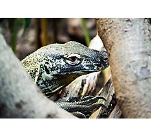 Baby Komodo Dragon Photographic Print