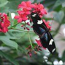 Pretty butterfly by Jamaboop