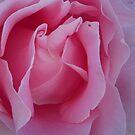 Delicate Swirls by Tama Blough
