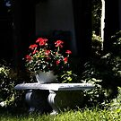 Bench with Flower Pot by PPPhotoArt