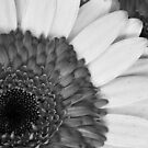 Overlapping Black and White by ElyseFradkin