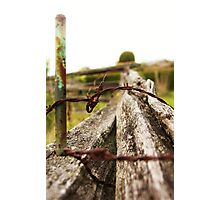 Fence: Stake, thorns and an old tree Photographic Print