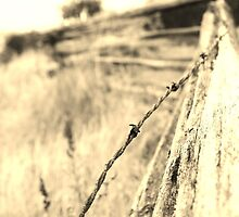 fence and field by shilohrachelle