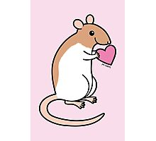 Sweet Ratty Valentine  Photographic Print