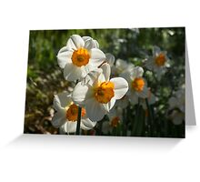 Sunny Side Up - Daffodils Blooming in a Fabulous Spring Garden Greeting Card