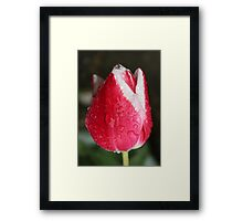 Red & White Framed Print