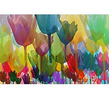 Tulip Flowers, Plant Stems - Blue Red Green Yellow Photographic Print