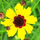 Wildflower by Sandra Moore