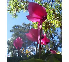 Standing tall so delicately Photographic Print