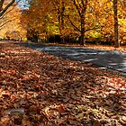 Mount Wilson The Glorious Colours of Autumn II NSW Australia by DavidIori