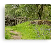 The path through the bluebells Canvas Print