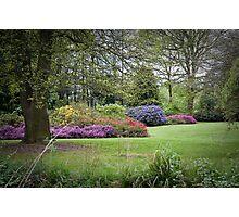 Azaleas in Springtime. Photographic Print