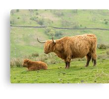 Highland Cow and Calf Canvas Print