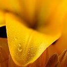Yellow petal by Craig Fletcher