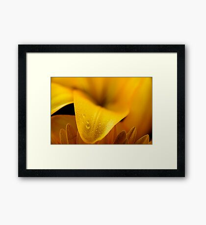 Yellow petal Framed Print