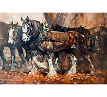 Draught Horses Team Photographic Print