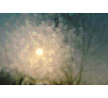 winter star.. Photographic Print