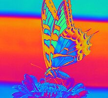 BUTTERFLY by Icarusismart