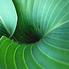 Green curves by Lena Weiss