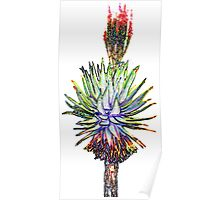 Aloe littoralis with pizzazz Poster