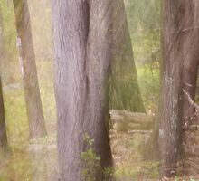 Ghostly Spring Forest by Lynn Wiles